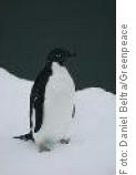 Antarktis_FeuermeldersystemDerErde